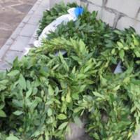 Xani Delvinakiou Wreaths.jpeg
